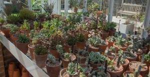 plant heritage